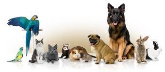 pavimenti per cani migliore pavimento per cani e agility dog,